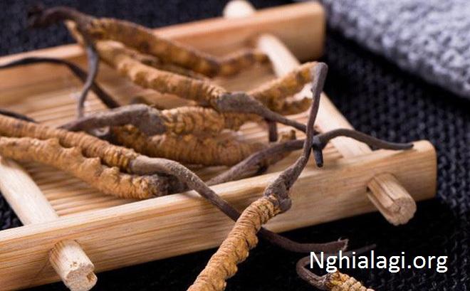 Đông trùng hạ thảo là gì? Phân loại, tác dụng và cách dùng chuẩn chỉ - Nghialagi.org