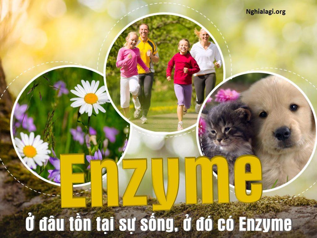 Enzym là gì ? Các loại enzyme tiêu hóa tốt cho cơ thể - Nghialagi.org